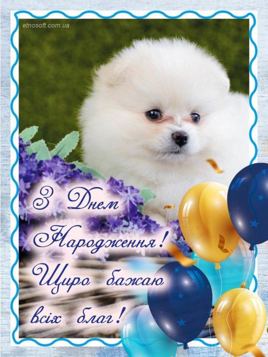Стильна листівка з Днем Народження з білою собачкою